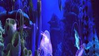 海 大海深水水母群 婚礼素材
