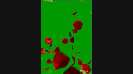 绿屏抠像竖版飘落的花瓣