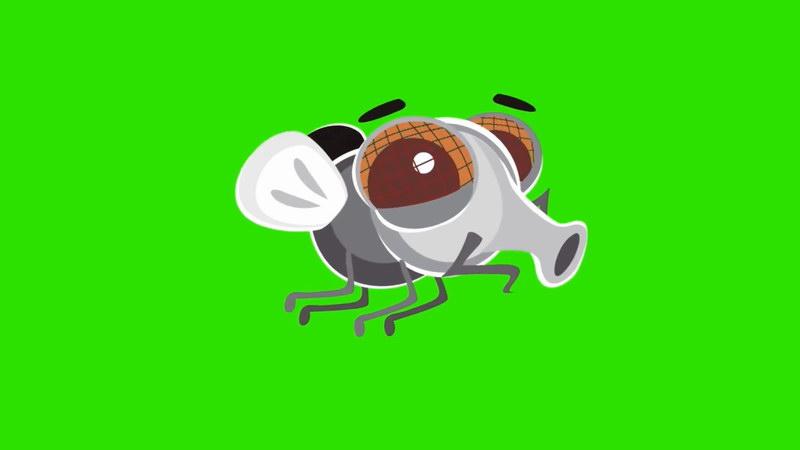 绿屏抠像卡通苍蝇