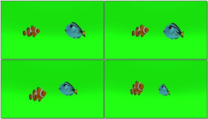 绿屏抠像热带鱼