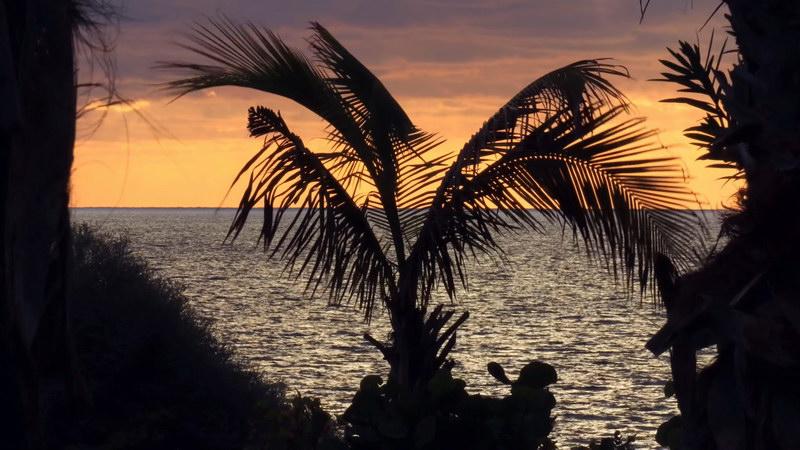 \[4K\]海风吹动下的椰树背影