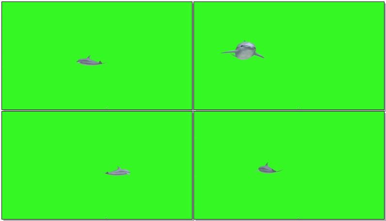 绿屏抠像海豚
