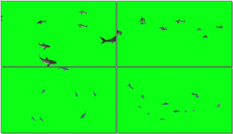 绿屏抠像鲨鱼