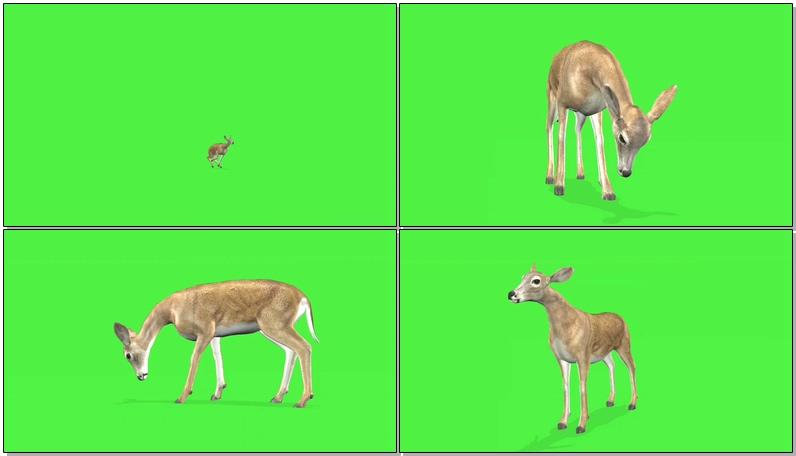 绿屏抠像野鹿