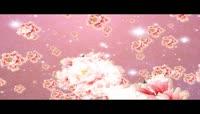 浪漫粉色牡丹