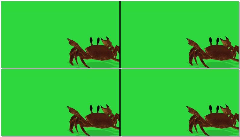 绿屏抠像螃蟹