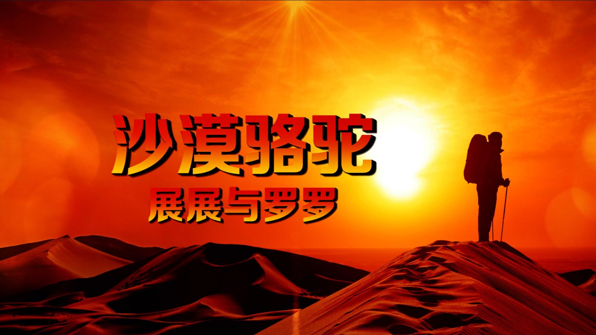 《沙漠骆驼》展展与罗罗歌曲背景