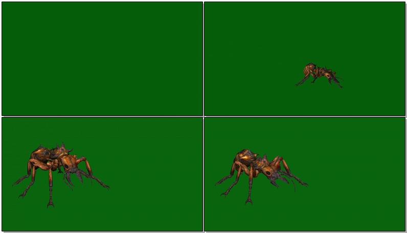 绿屏抠像蚂蚁