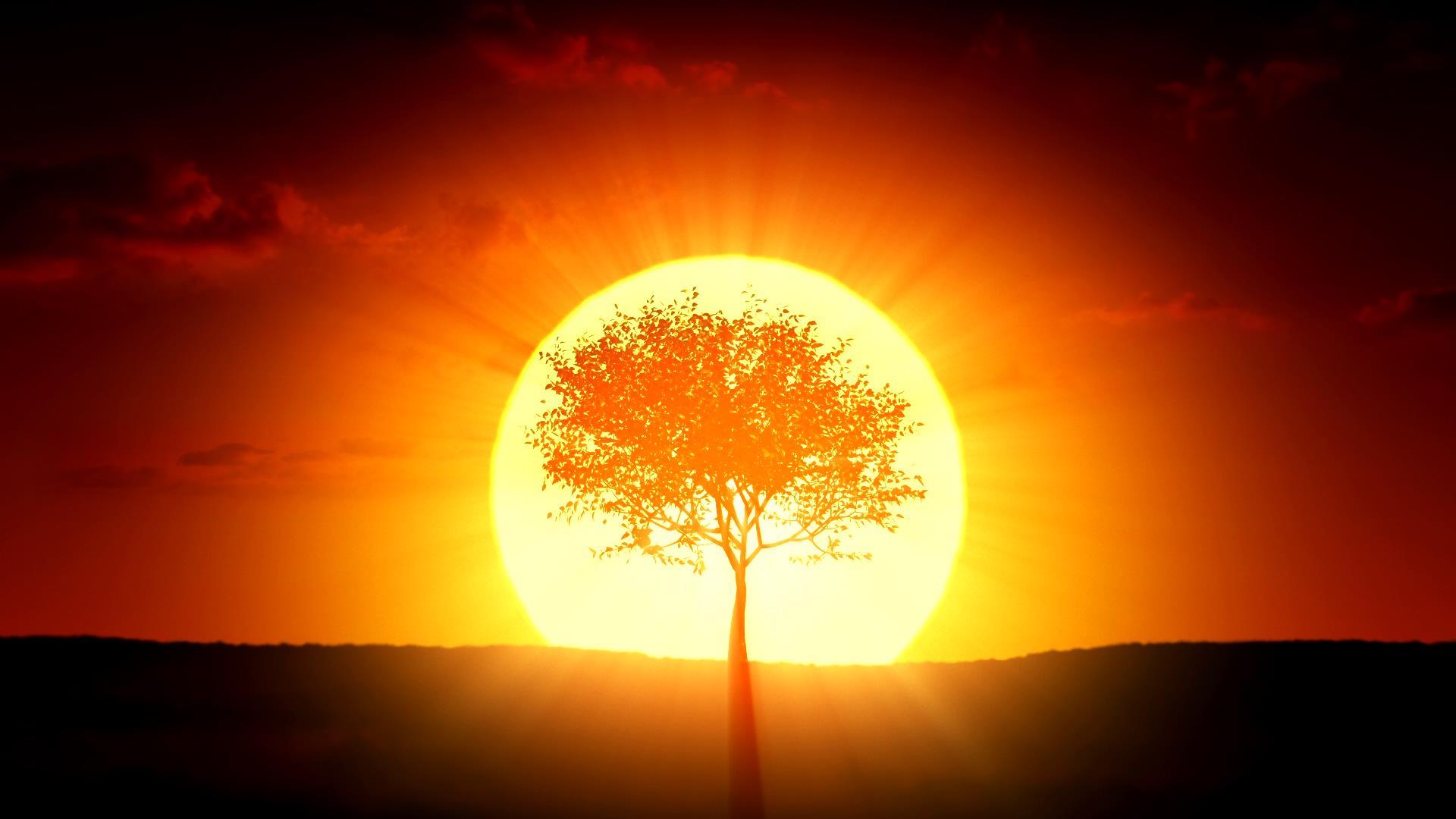 逆光成长的树