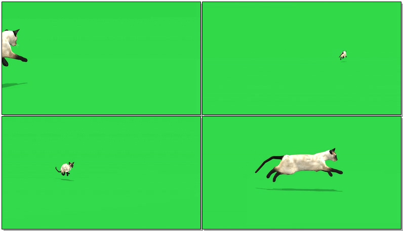 绿屏奔跑的黑腿白猫