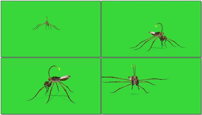 绿屏抠像史前巨型昆虫