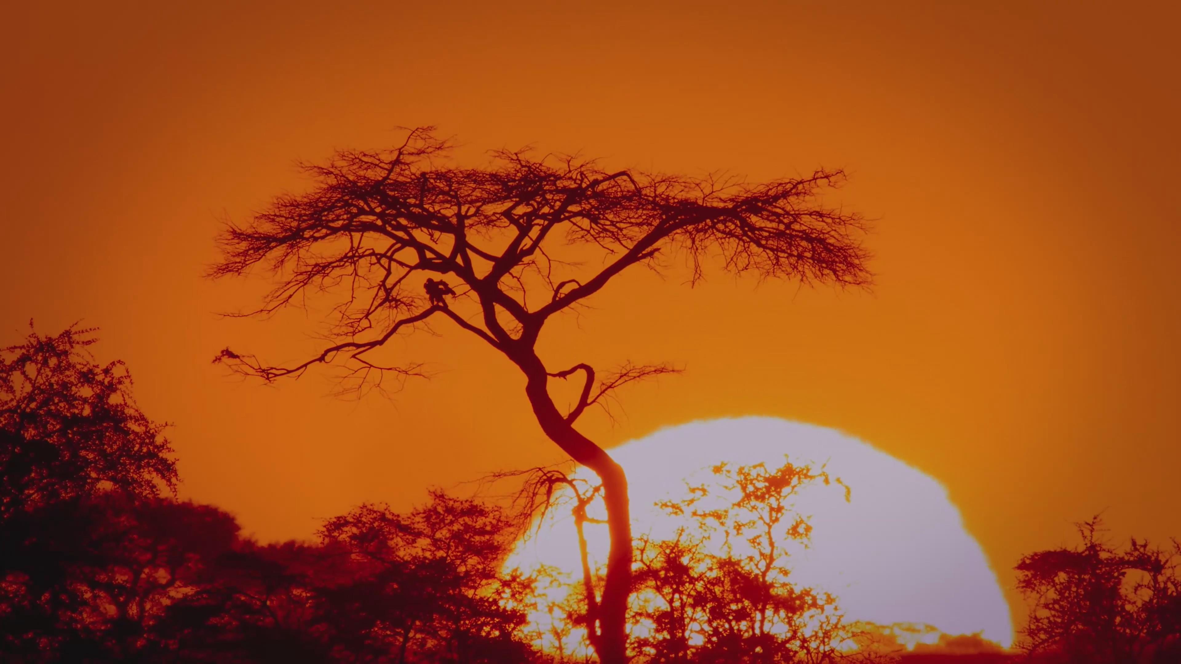 动物世界 动物 狮子 豹子 长颈鹿 斑马 角马 河马 迁徙 大草原 非洲大草原 日出 风暴 暴雨 捕食 捕猎 大象 高温 暴雨 狮吼 4k 航拍 超帅 唯美