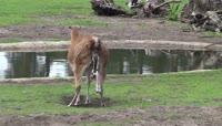 生命的诞生动物分娩视频素材