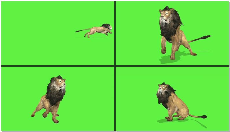 绿屏抠像狮子