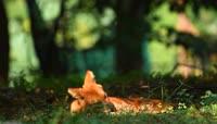 野生动物保护区实拍视频素材