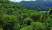椰树海岛视频素材