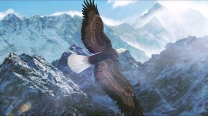 实拍各种雄鹰飞翔景观视频素材