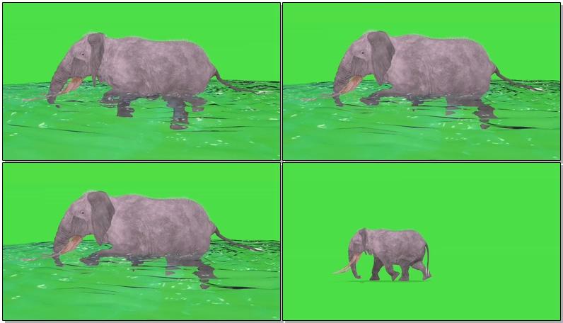 绿屏抠像奔跑游泳的大象