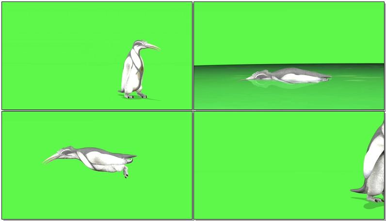 绿屏抠像企鹅