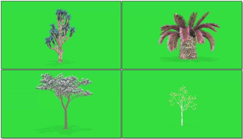 绿屏抠像各种草本植物树木
