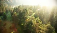 空拍森林穿梭阳光光线
