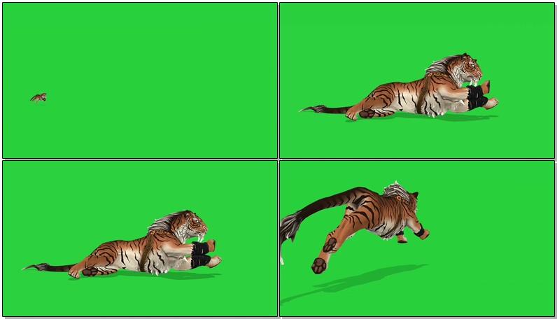 绿屏抠像奔跑的剑齿虎
