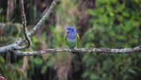 大自然可爱小鸟视频素材
