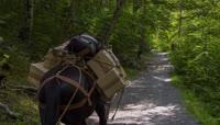 丛林中驮货的马2K视频素材