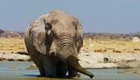 野生动物保护区视大象野牛频素材