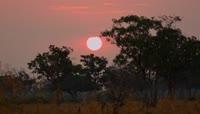 红彤彤太阳从树梢升起2K视频素材