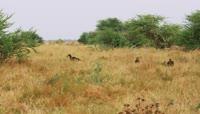 茂密草丛中的小鸟2K视频素材
