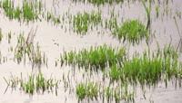 2K下雨天的农田视频素材