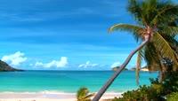 碧海蓝天椰树海滩视频素材