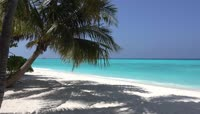 多款海岛椰树2K视频素材