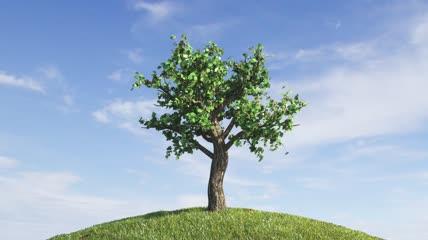 清新大树逐渐生长过程