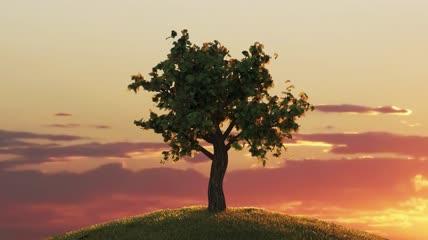黄昏大树逐渐生长过程