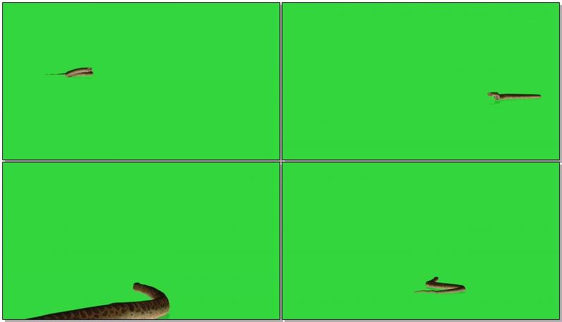 绿屏抠像蟒蛇