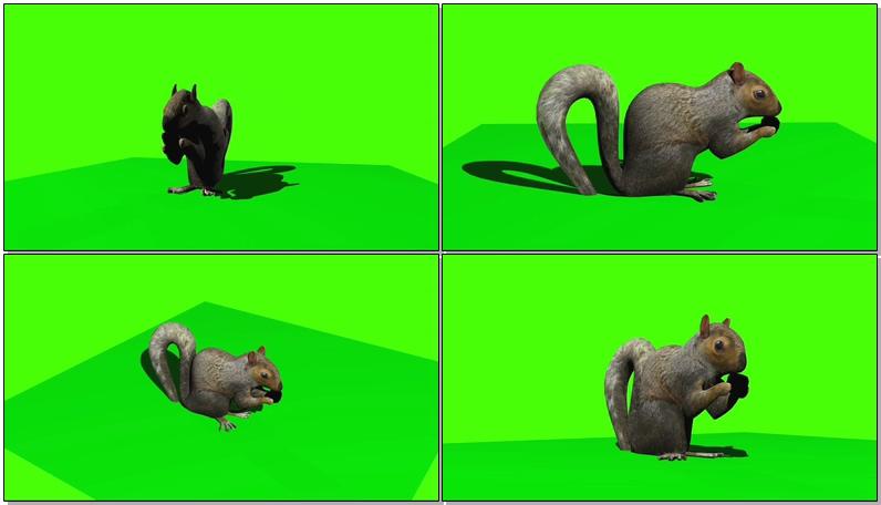 绿屏抠像松鼠