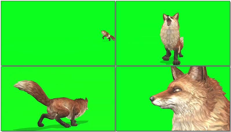 绿屏抠像狐狸