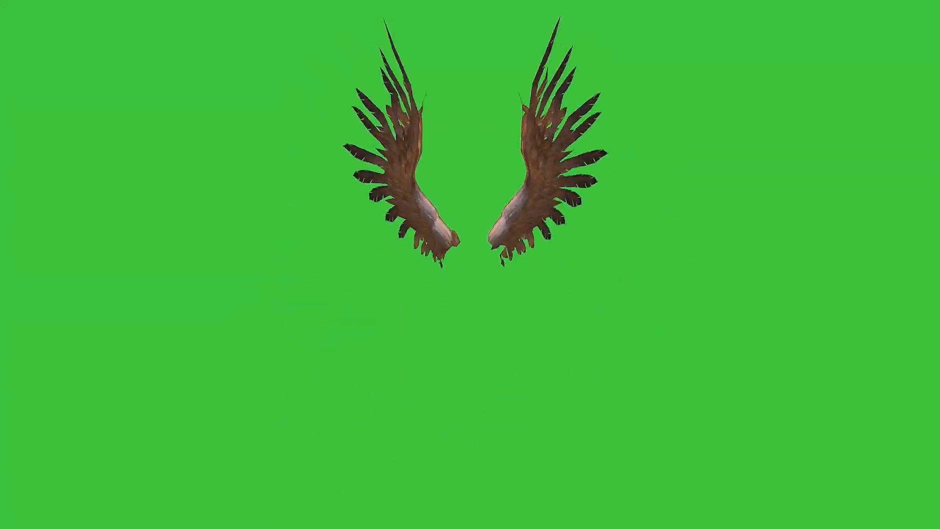 绿屏抠像挥舞的翅膀