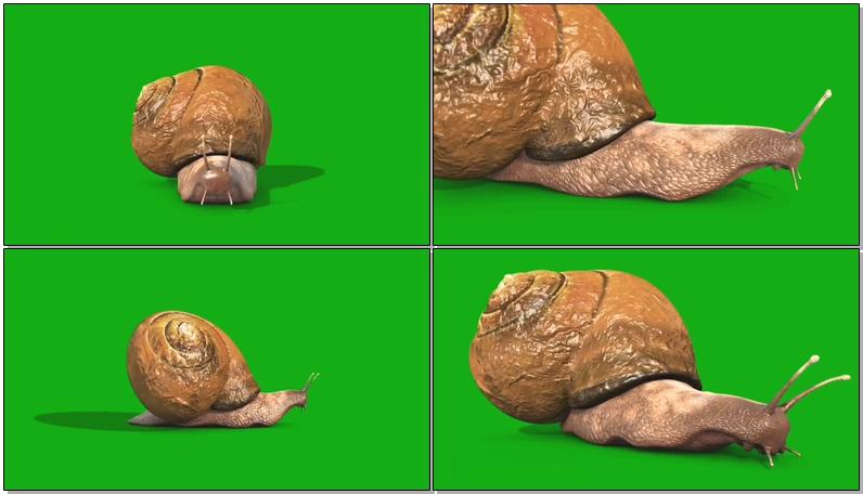 绿屏抠像蜗牛
