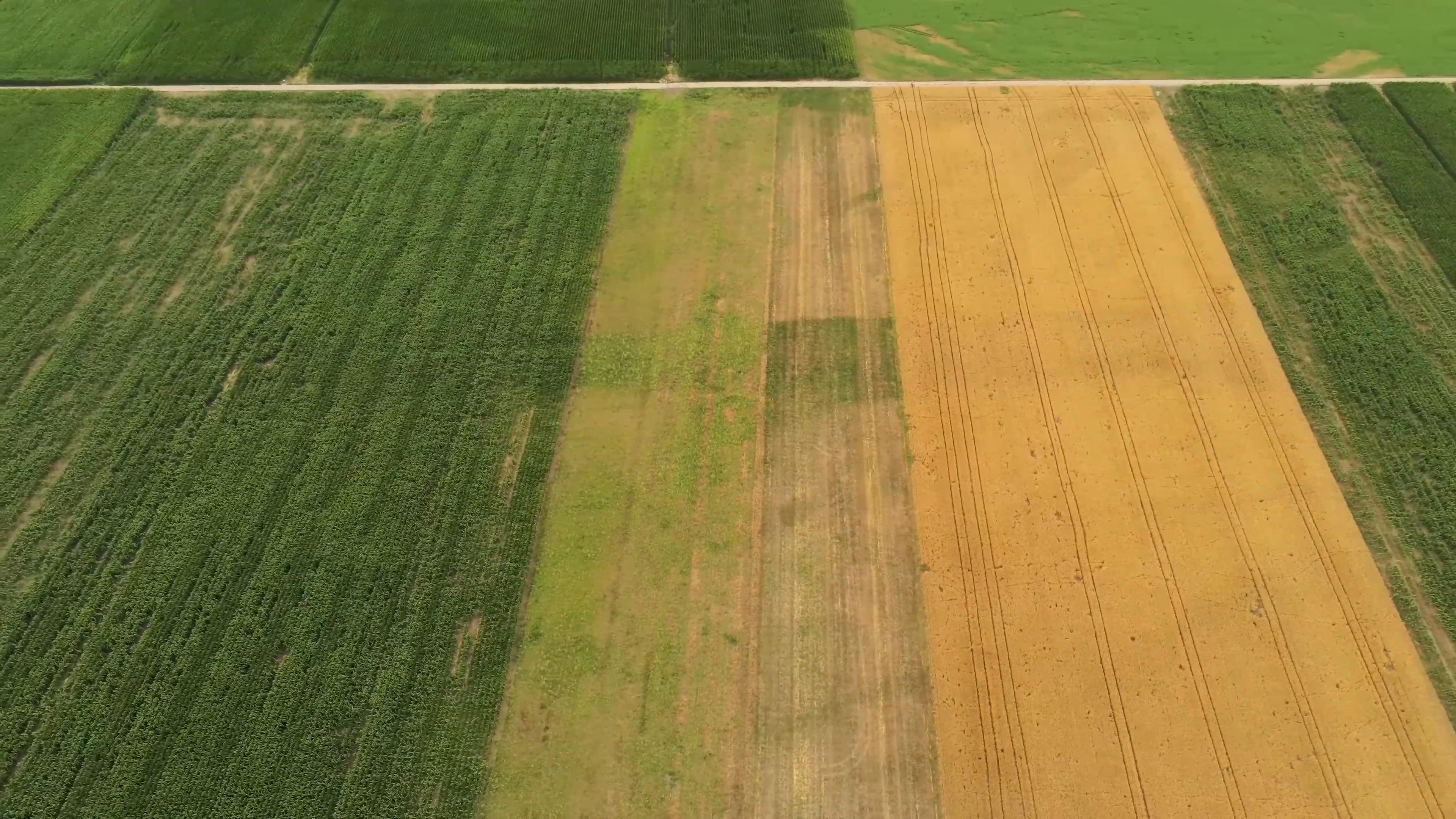 农业 农田 田园  玉米地 航拍农业 田园拍摄