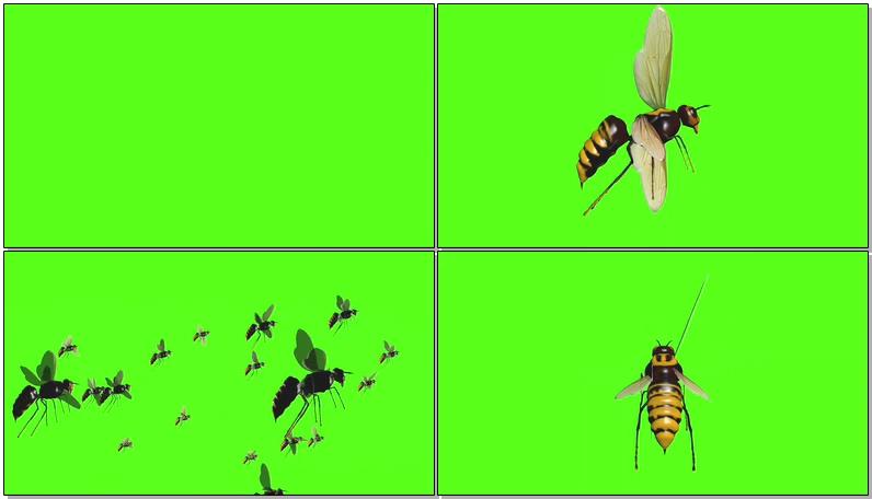 绿屏抠像黄蜂