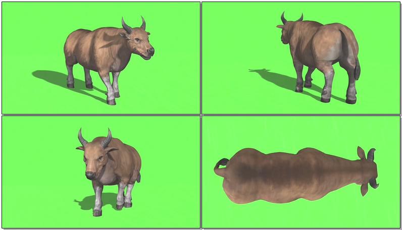 绿屏抠像野牛