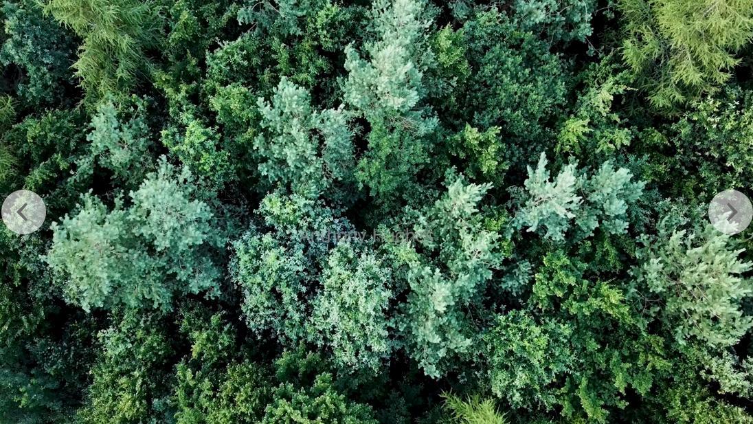 丛林 树梢  航拍丛林 深林 森林树木  深林覆盖