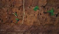 洞穴中的小鸟视频素材