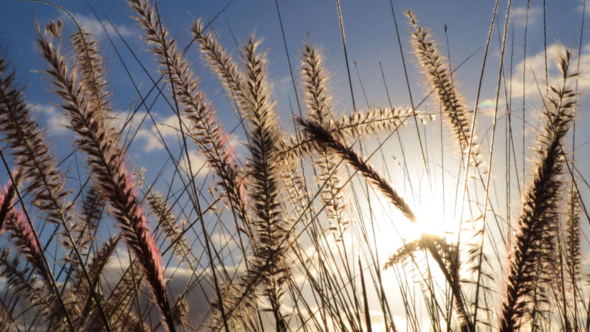 稻草随风飘荡