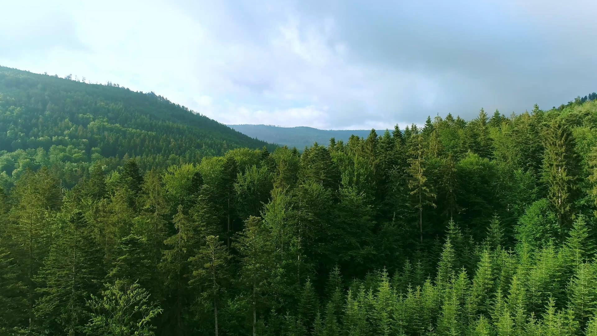 航拍美丽的山林风景