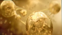 黄金细胞 滋润 能量