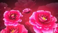 大气牡丹花中国红流光风格晚会歌舞演出开场转场背景